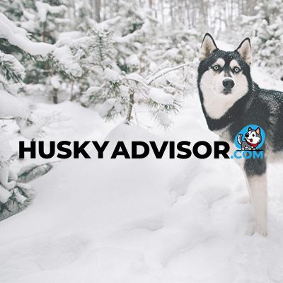 Husky Blog design & set-up